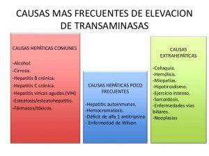 ¿Qué son las Transaminasas?