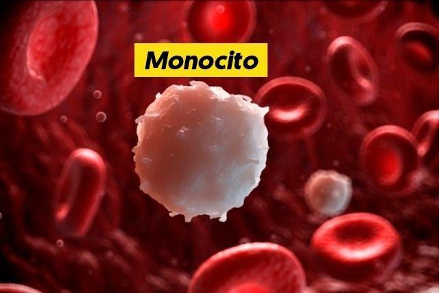 que son los monocitos